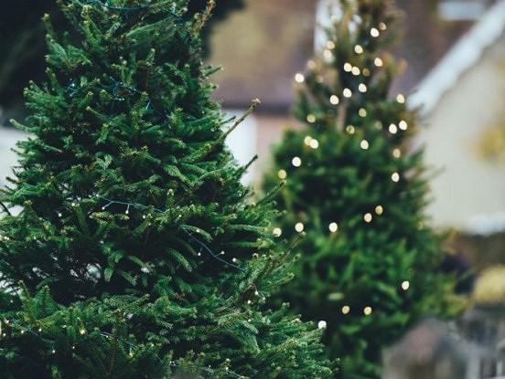 Seši noteikumi, pateicoties kuriem jūsu Ziemassvētku eglīte stāvēs ilgi un izskatīsies ideāli