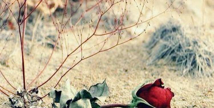 """""""Dzenoties"""" pēc dārgām Ziemassvētku dāvanām, sieviete zaudē visdārgāko dzīvē"""