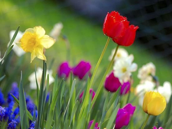 Pavasara dzejolis
