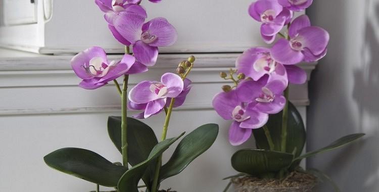 Kā kopt orhidejas