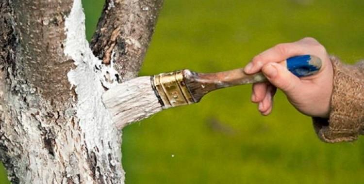 Vai nobalsināji savus augļu kokus? Uzzini kā to izdarīt