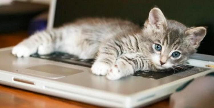 Tavam kaķim patīk dators?