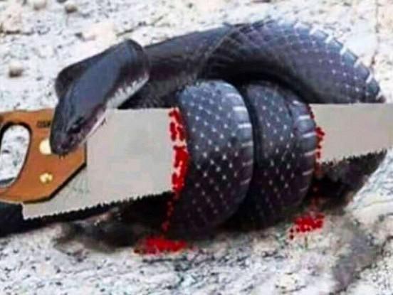 """Gudra pamācība par čūsku un zāģi: """"Dusmojoties uz tiem, kas mums dara pāri, mēs visstiprāk ievainojam sevi…"""""""