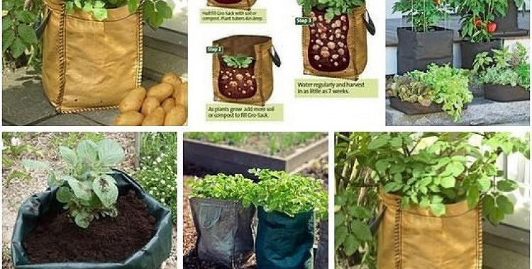 Audzējam kartupeļus… maisā!!!
