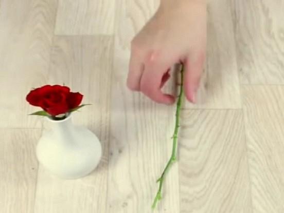 Kā izaudzēt rozi… kartupelī