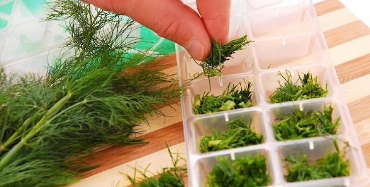 Zaļumu sasaldēšana ziemai