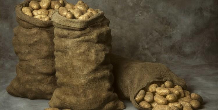 Kā bez zaudējumiem saglabāt kartupeļu ražu līdz pavasarim
