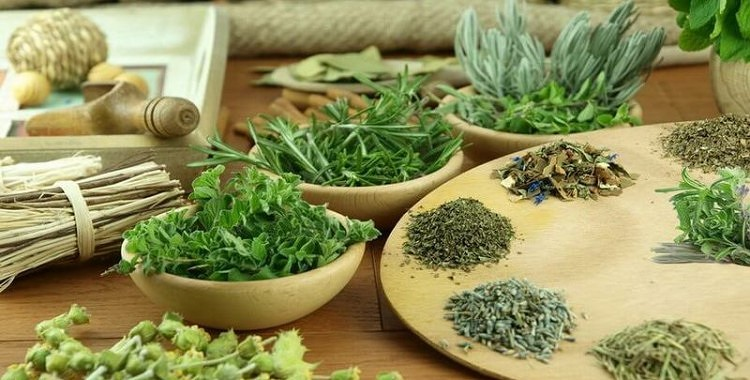 Tablešu vietā – efektīvi temperatūru pazeminoši ārstnieciskie augi