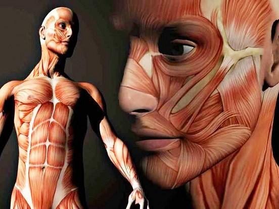 Iekšējo orgānu saistība ar psihosomatiskajām saslimšanām