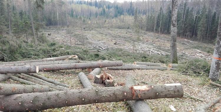 Valsts mežos ir iespēja iegūt bez maksas malku