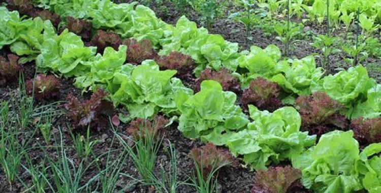 Iestādi savas dārza veltes savādāk un Tu būsi pārsteigts ar rezultātu!