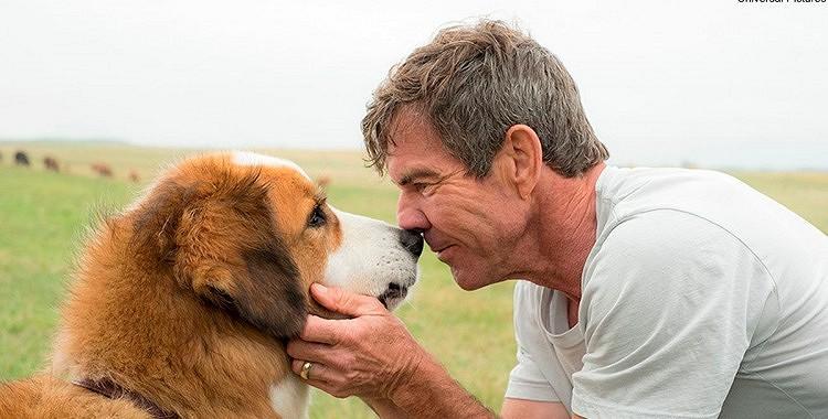 Suņi nekad nemirst – viņi vienmēr paliek mūsu sirdīs… Nekad par to neaizmirstiet…