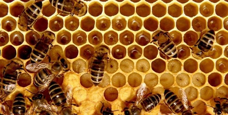 Kāpēc šūnu medus ir tik vērtīgs