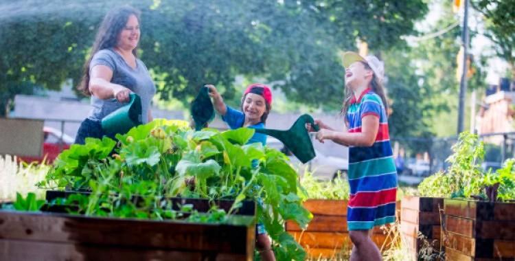 Kā pasargāt augus un stādus no karstuma