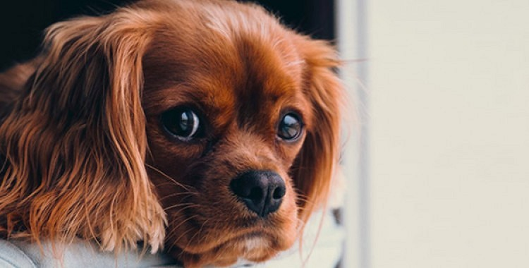 Kā suņi sajūt sliktus cilvēkus?