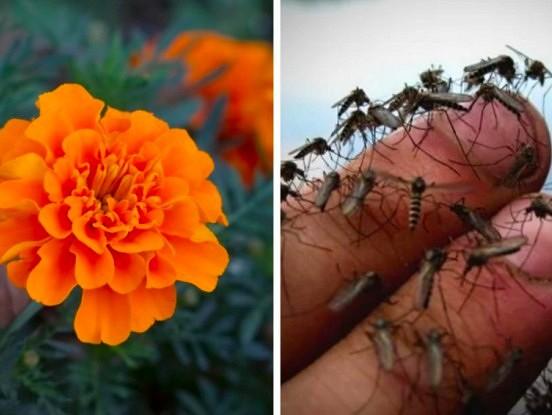 Lai odi jūsu mazdārziņam mestu lielu līkumu, vienkārši iestādiet pareizos augus