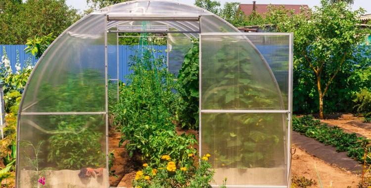 Dārzeņu saderība siltumnīcā:  kurus augus nedrīkst stādīt kopā