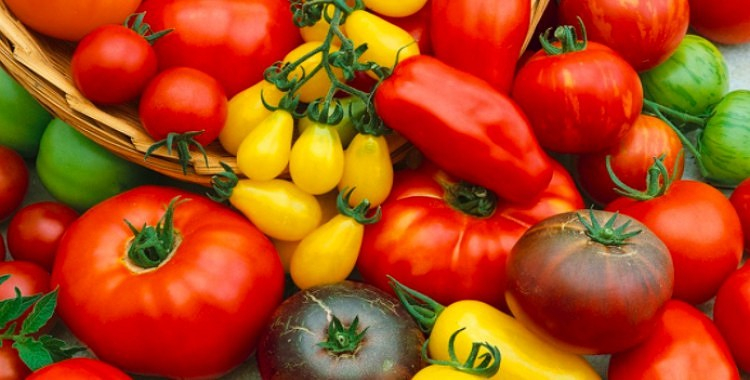 Sarkanā komanda:  viss par tomātu veselīgumu