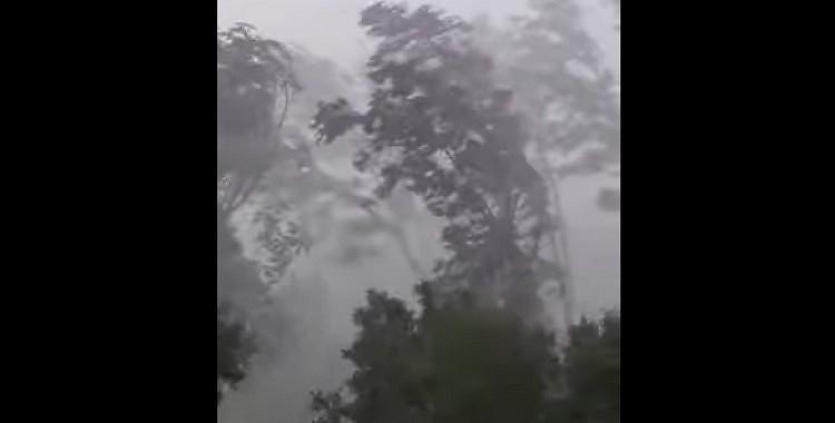 VIDEO: Aizkrauklē lielā vēja dēļ lūzt koki! Iespaidīgi skati