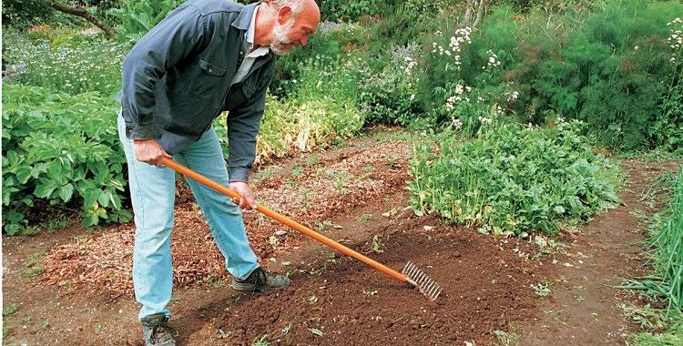 Vai zināji, kādēļ vajag izkaisīt diļļu sēklas pa visu dārzu?