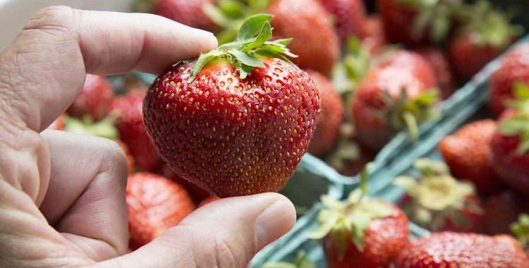 9 noslēpumi ,kā izaudzēt lielas zemenes