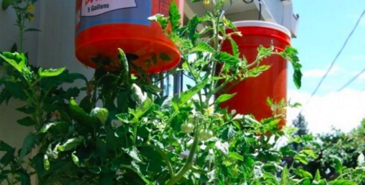 Lielisks un vienkāršs līdzeklis kā izaudzēt tomātus uz balkona