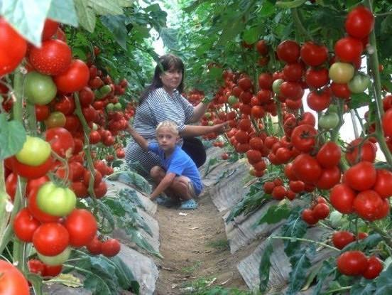 Lieliska recepte tomātiem: Ļoti iedarbīgs līdzeklis izcilai ražai!