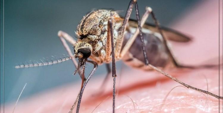 Odiem- NĒ! Dabīgas smaržas, kas atbaida odus