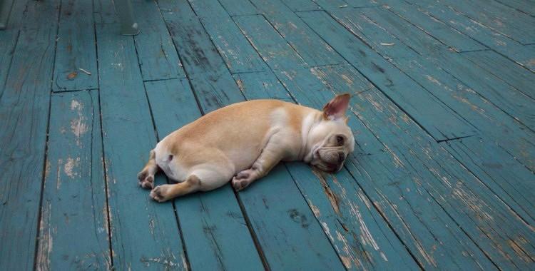 7 iemesli, kāpēc visu laiku jūties noguris